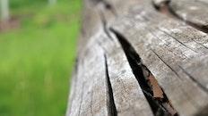 wood, tree