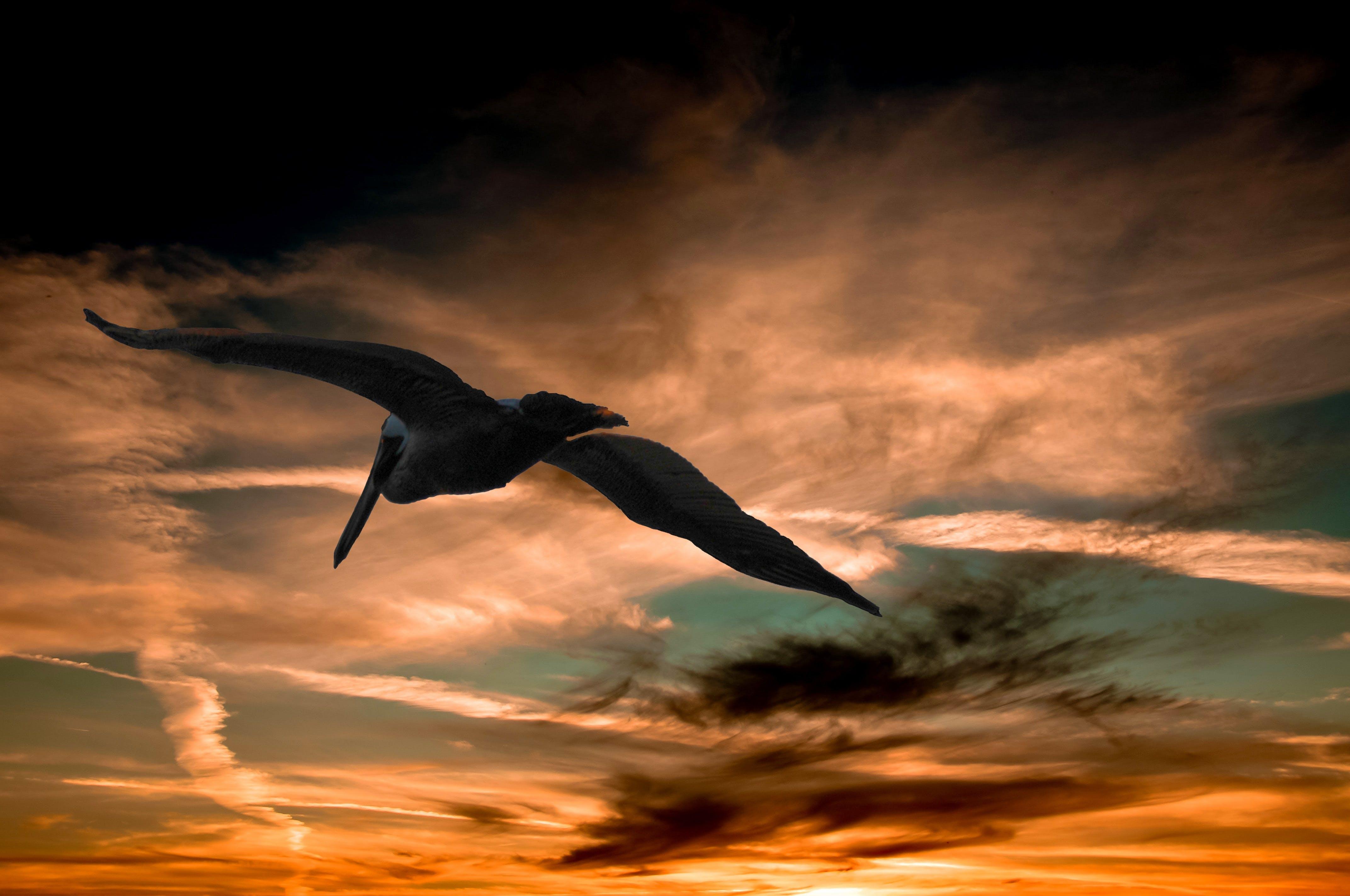 bird, clouds, cloudy