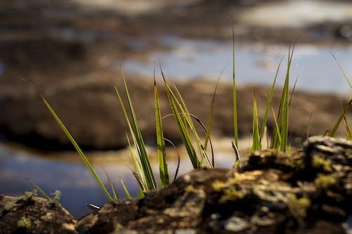 Δωρεάν στοκ φωτογραφιών με ταξίδι, υδρόβια φυτά, φύση, χρυσή ώρα
