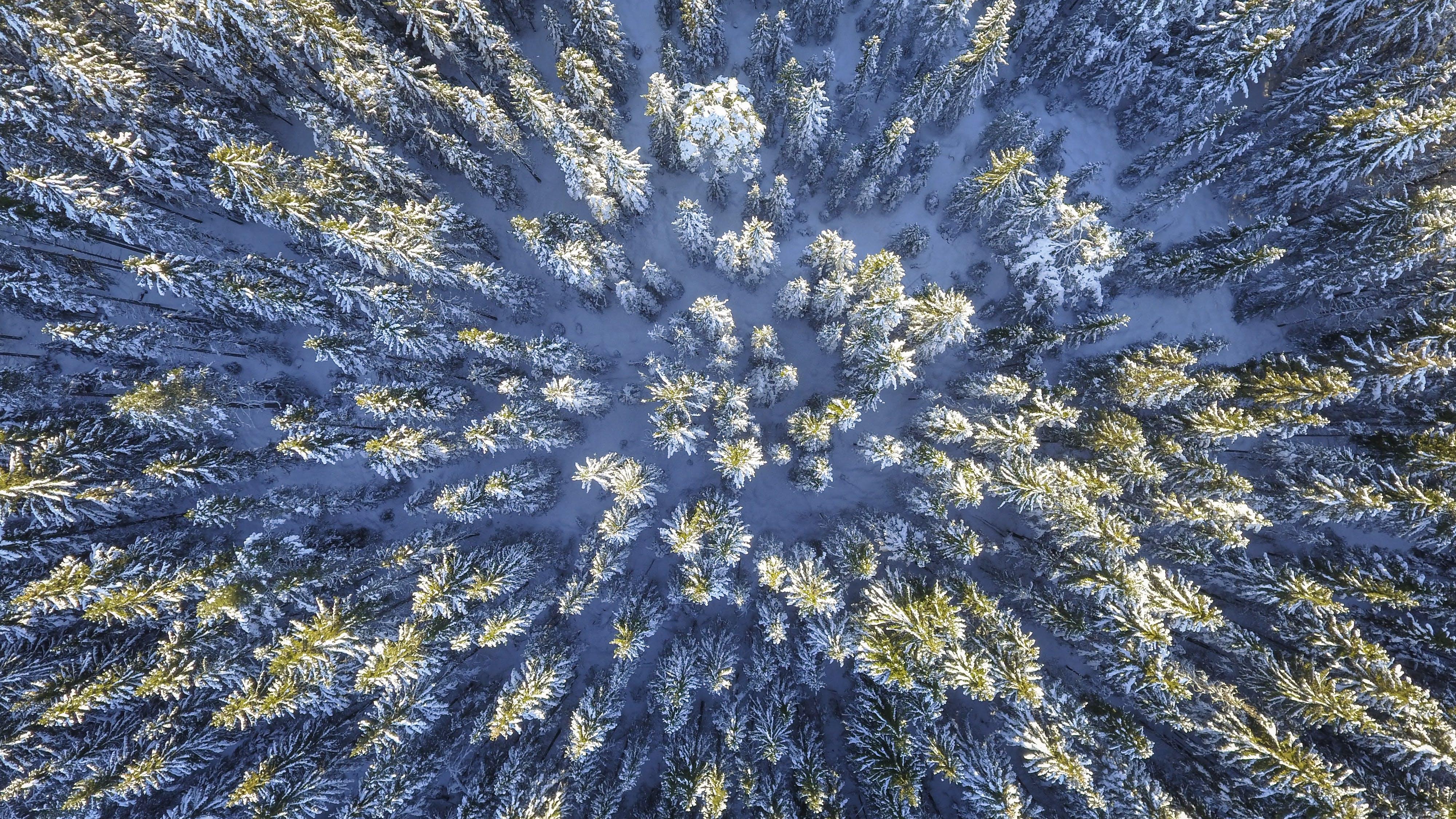 Kostenloses Stock Foto zu aufsicht, bäume, einfrieren, eis