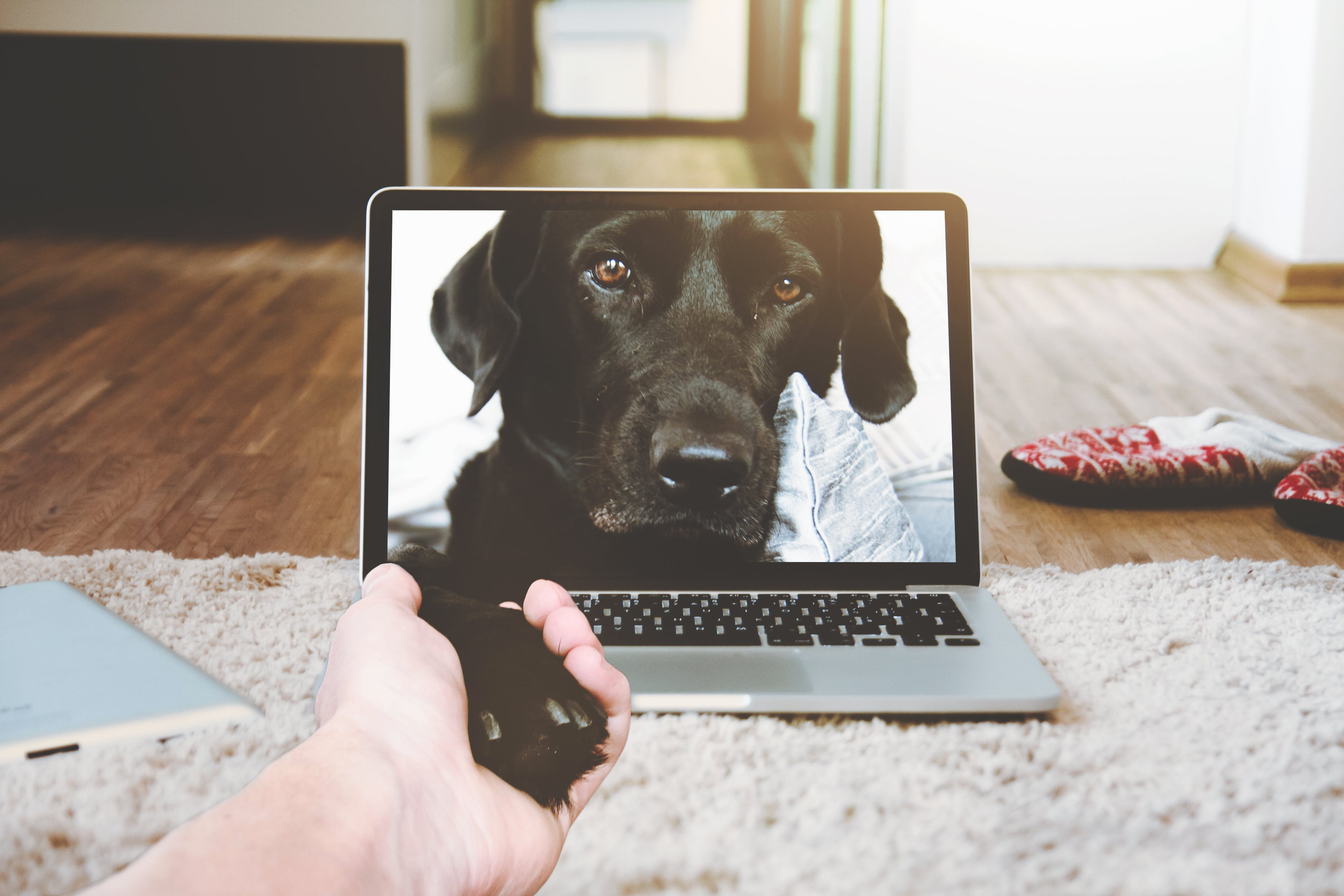 Free stock photo of hand, laptop, animal, dog