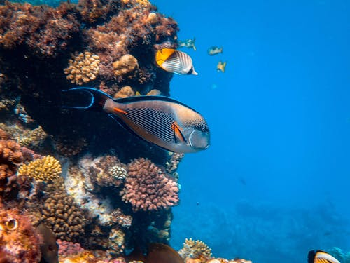 Photo of Fishes Near Coral Reefs