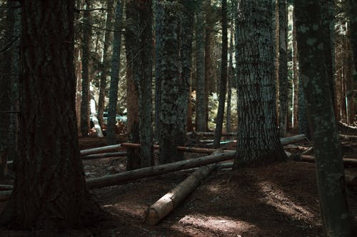 Forest with Fallen Trees