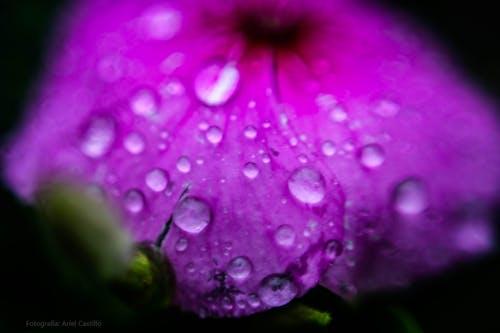 Free stock photo of beautiful flower, closer, flower