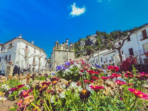 Free stock photo of cadiz, españa, flowers