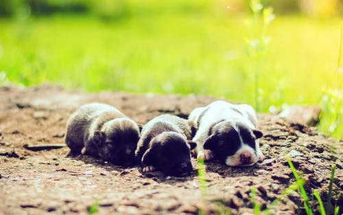 Free stock photo of adorable, aniimal, baby dog