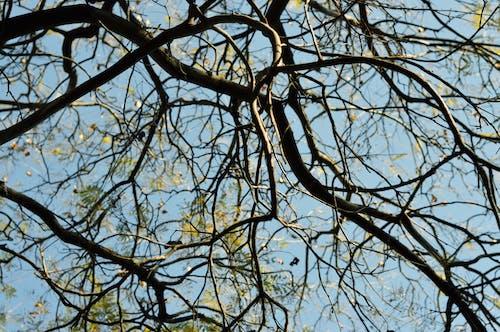Foto profissional grátis de árvore, filiais, filial, perspectiva