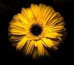dark, petals, plant