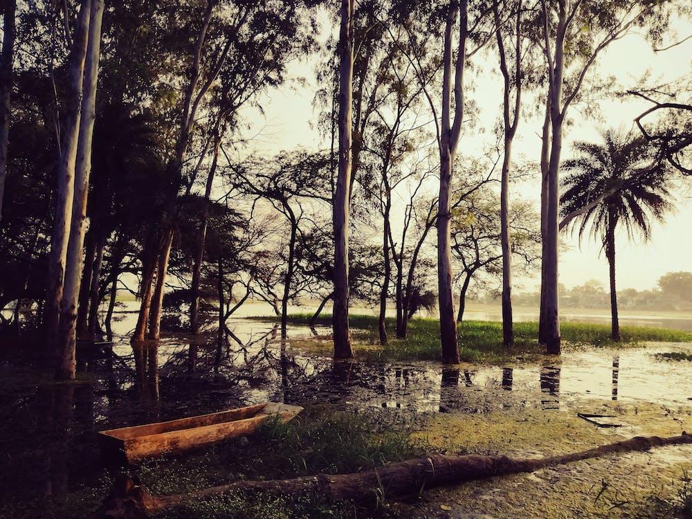 boat, lake, lotus