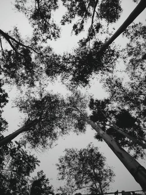 Free stock photo of black and white, silhouette, trees