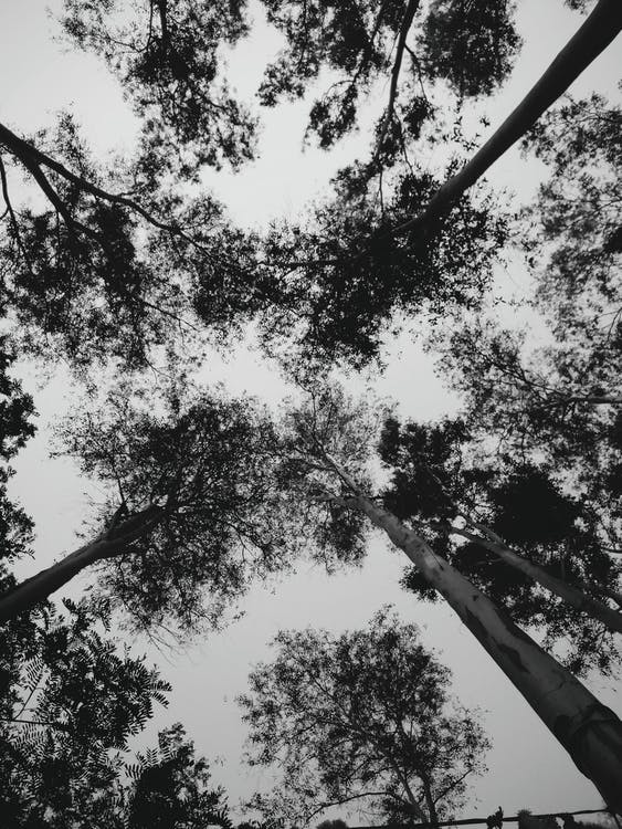 black and white, silhouette, trees