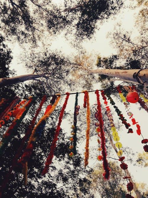 Kostenloses Stock Foto zu bäume, lotus, schatten, see