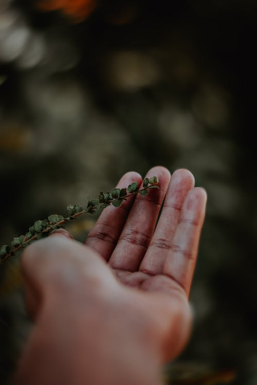 Small Leaves on Person's Hand