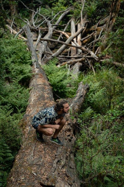 Ingyenes stockfotó ágak, buja, erdő, evés témában