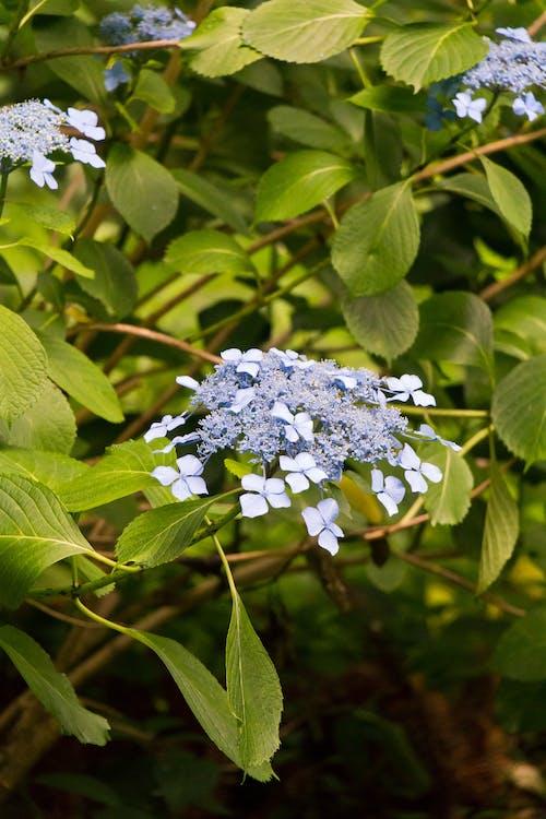 Photos gratuites de botanique, branches d'arbre, été, fermement
