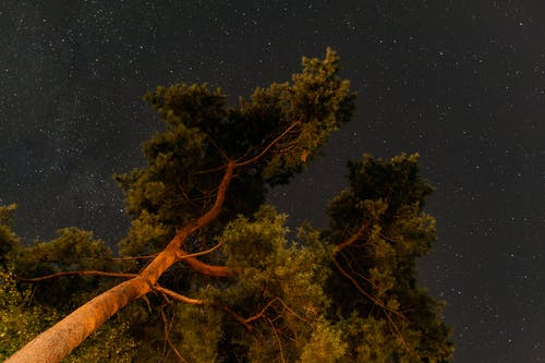 Free stock photo of night, sky, stars, tree