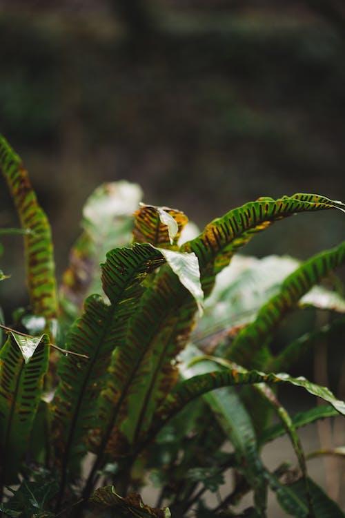 Бесплатное стоковое фото с ботаника, ботанический, вертикальный
