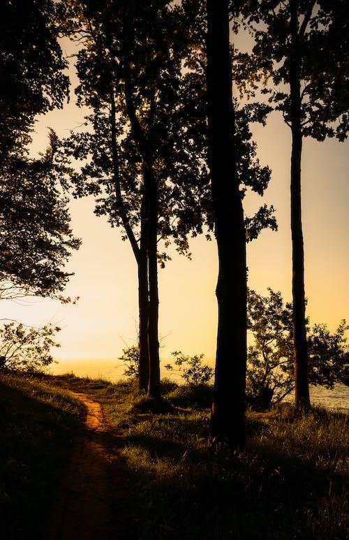 Δωρεάν στοκ φωτογραφιών με ακτή, Βαλτική θάλασσα, βραδινός ουρανός, δέντρα