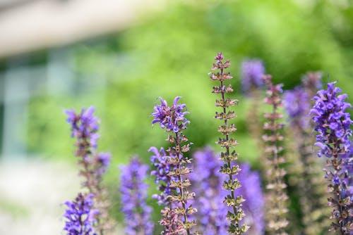 Gratis lagerfoto af blomst, bokeh, grøn, lilla