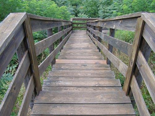 Kostenloses Stock Foto zu alte treppe, bäume, grün, holz