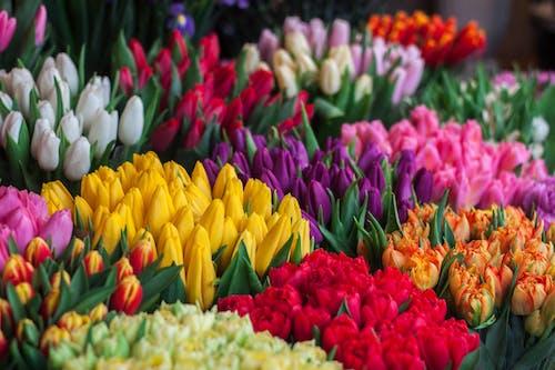 Photographie De Tulipes De Couleurs Assorties