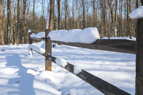 Free stock photo of fence, forest, snow, trees