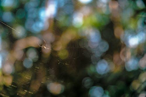 คลังภาพถ่ายฟรี ของ ความลึก, เบลอ, แมงมุม, แมลง