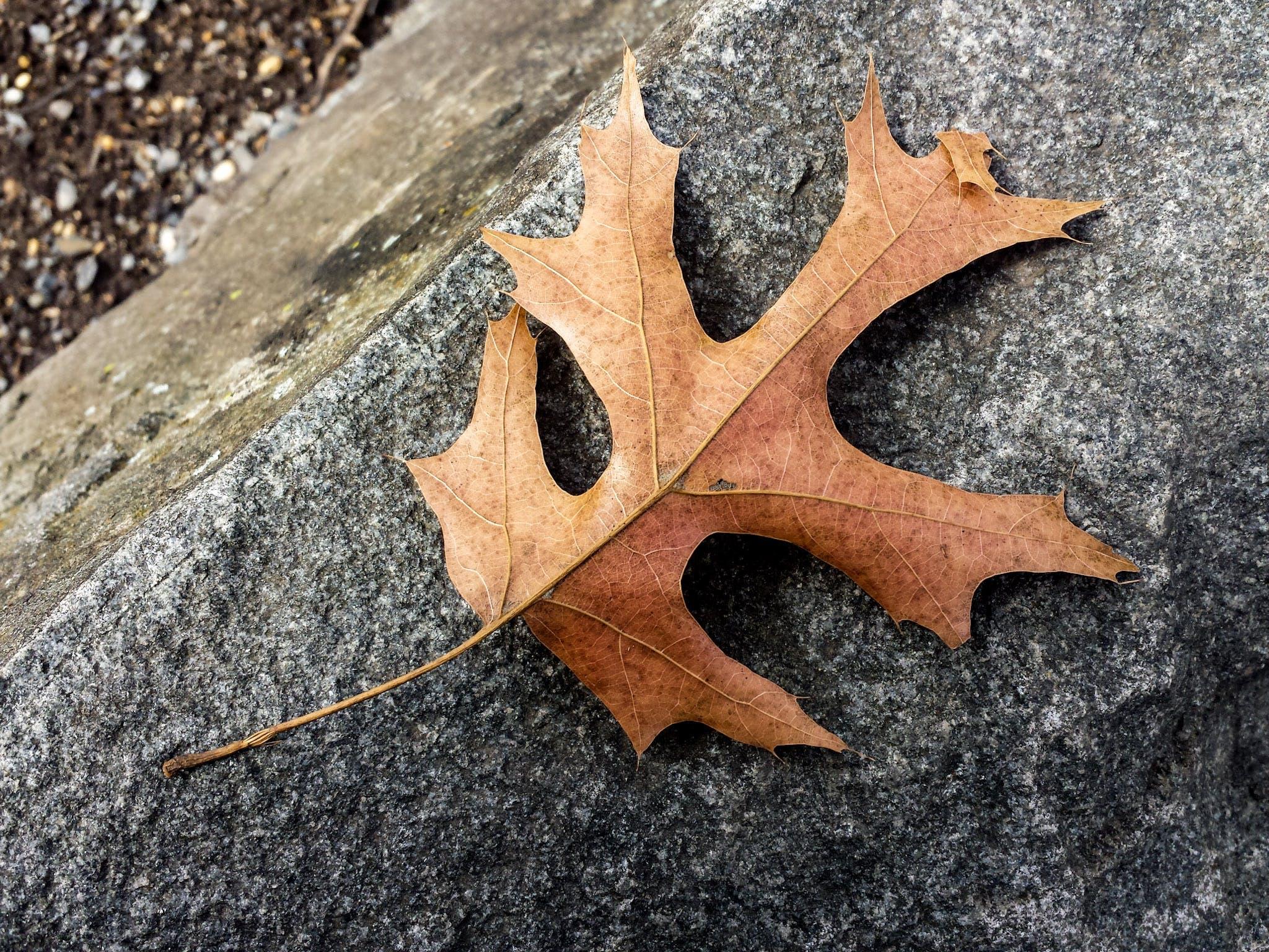Free stock photo of autumn leaf, leaves