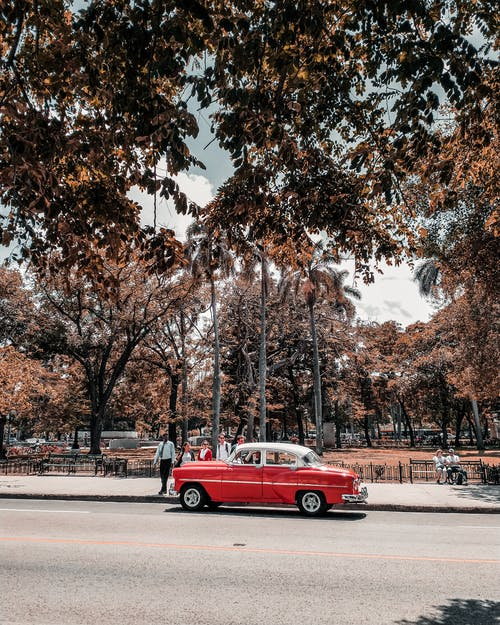 Free stock photo of cuba, palm trees, red car, street