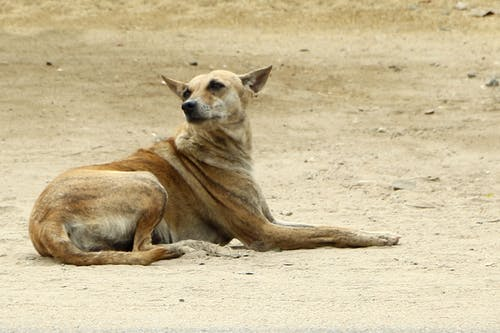 Ingyenes stockfotó állat, álló kép, aranyos, arc témában