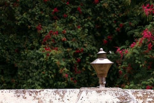 คลังภาพถ่ายฟรี ของ ก้านดอก, การฟื้นฟู, การเกิดใหม่, การเจริญเติบโต
