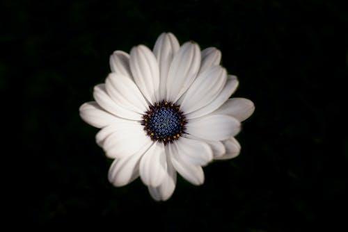 Photos gratuites de amour, blanc, brouiller, contraste