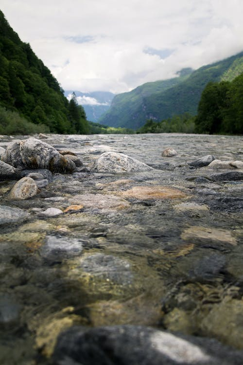 Photos gratuites de arbres, boisé, bord de rivière, cailloux