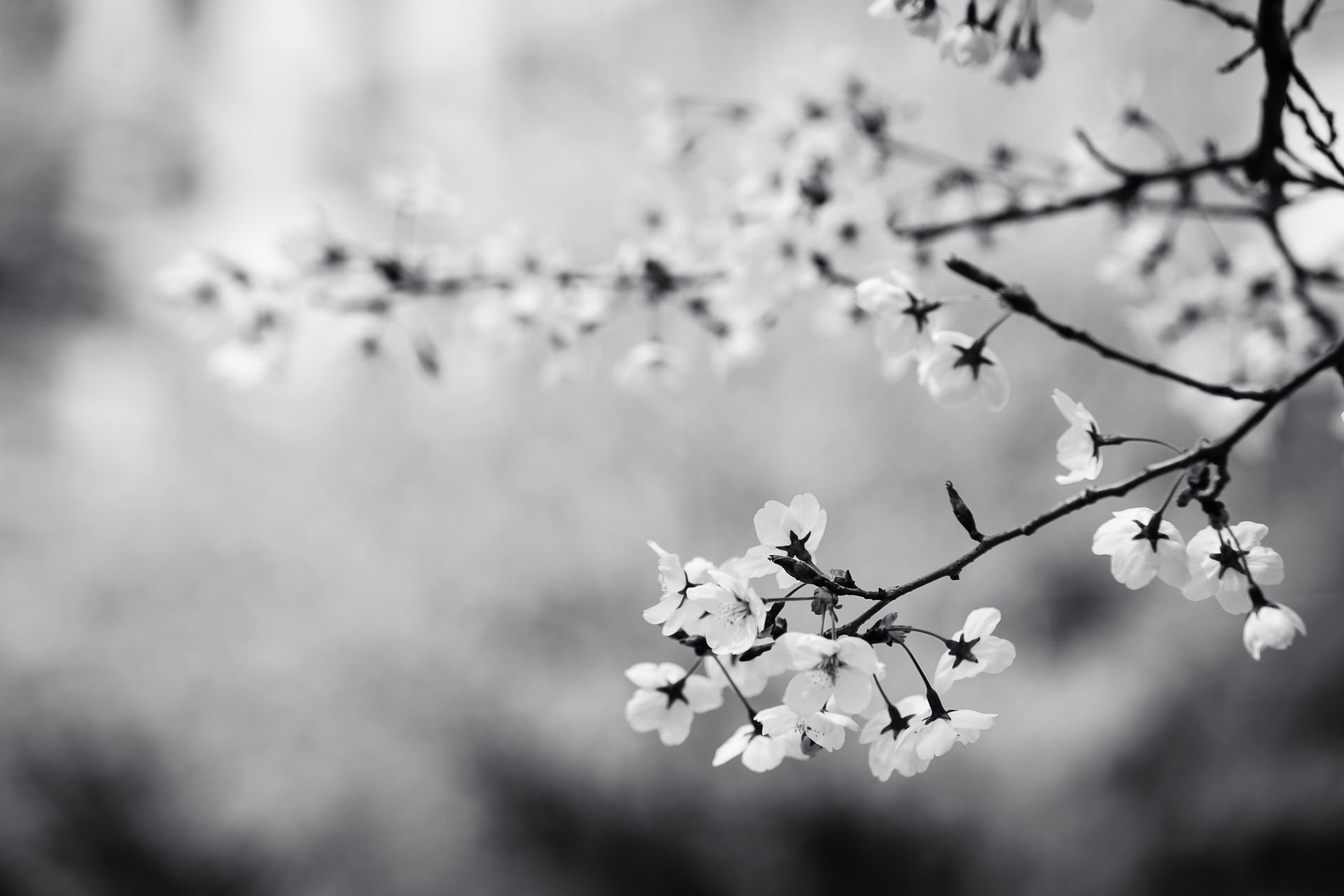 Picture black and white yelomdiffusion free black and white photography pexels free stock photos mightylinksfo