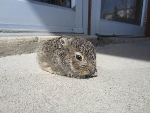 Darmowe zdjęcie z galerii z króliczek, opalenizna słoneczna, słodkie zwierzaki