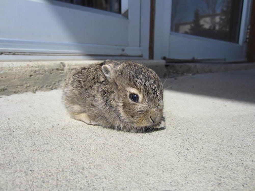 Free stock photo of baby bunny, cute animals, sun tanning