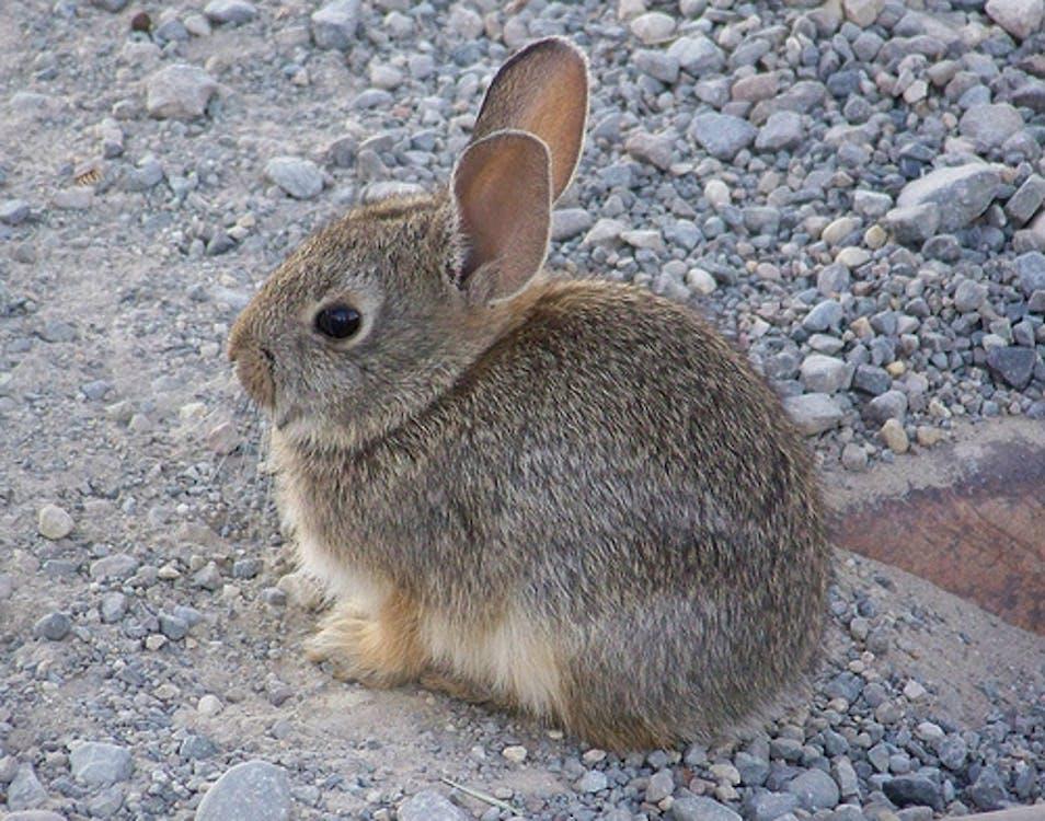 Free stock photo of baby bunny, cute animals