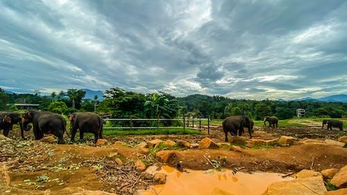 Základová fotografie zdarma na téma divoká zvířata, divoký slon, džungle