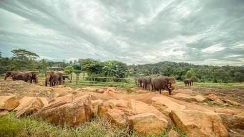 Free stock photo of beautiful sky, elephant, elephant orphanage