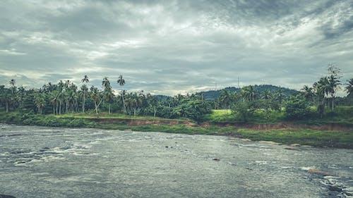 Základová fotografie zdarma na téma džungle, hdr, hory