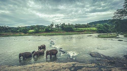 Základová fotografie zdarma na téma hora, řeka, slona svatyně