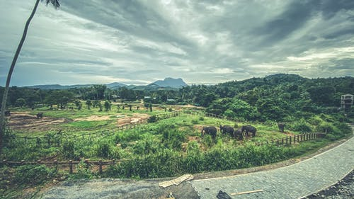 Free stock photo of animals, elephant sanctuary, elephants