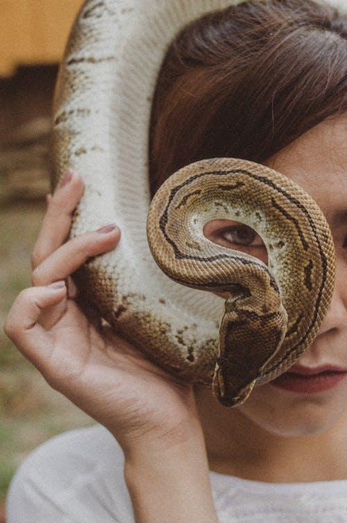 python, 光學, 咖啡色頭髮的女人, 嚴肅 的 免费素材照片