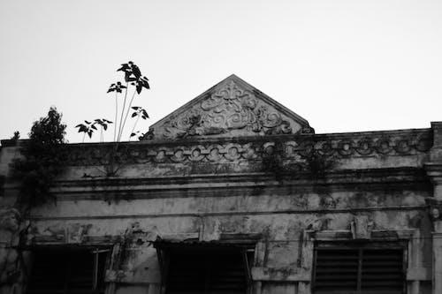 Free stock photo of abandoned, scary