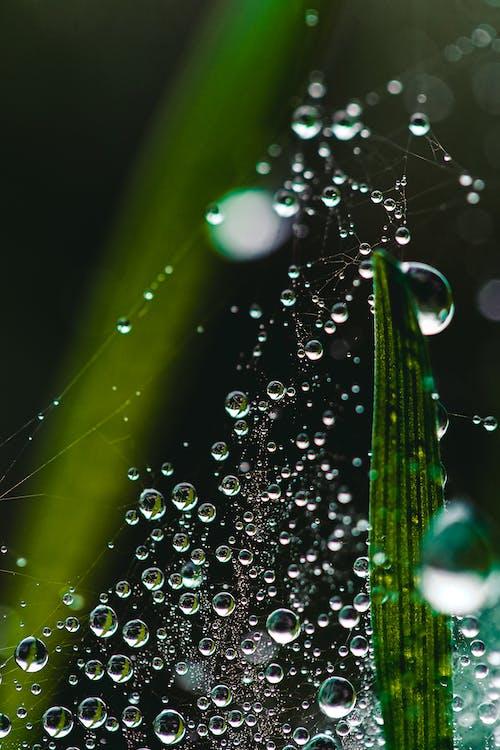 Foto profissional grátis de água da chuva, chegar mais perto, chovendo, chuva