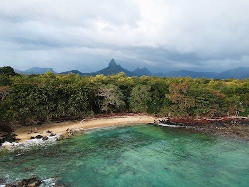 Бесплатное стоковое фото с Аэрофотосъемка, вода, деревья, залив
