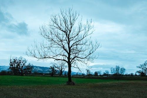 Ingyenes stockfotó ág, almafa, erdőirtás, fa korona témában