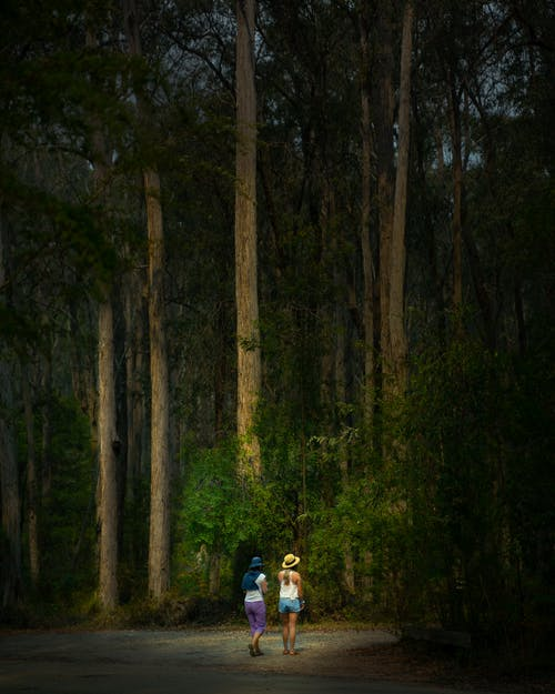 Free stock photo of australia, bush, forest, green