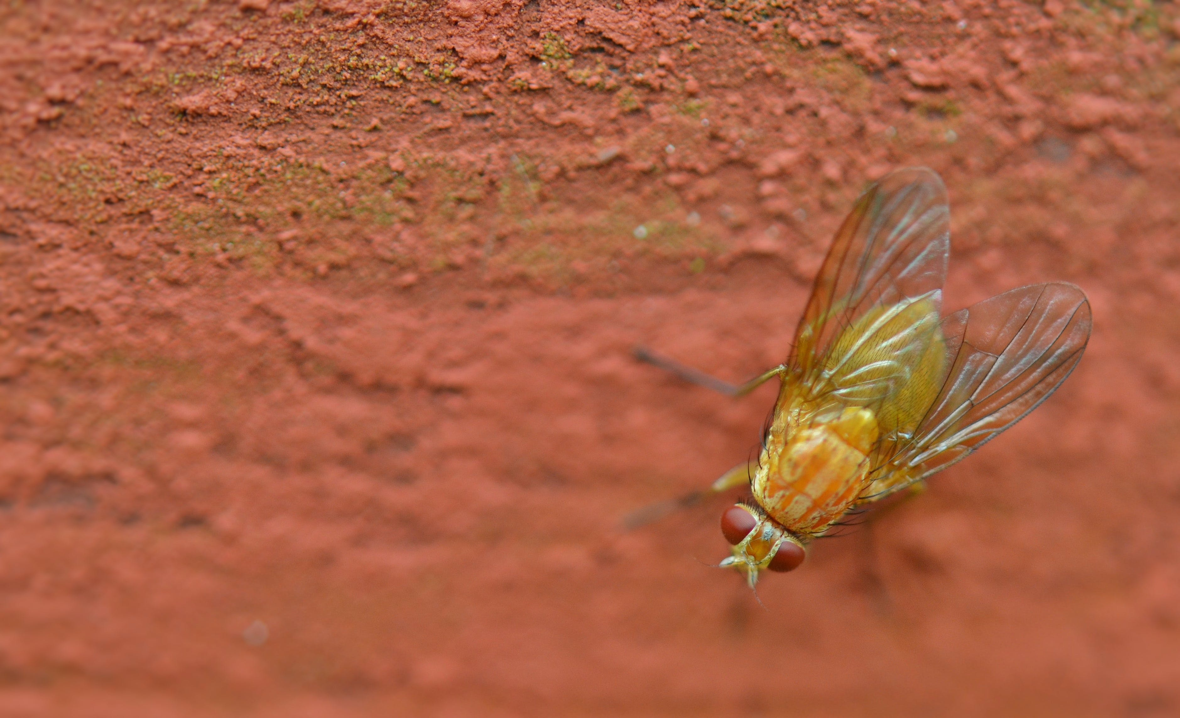 Green and Yellow Fly Perching on Red Surface