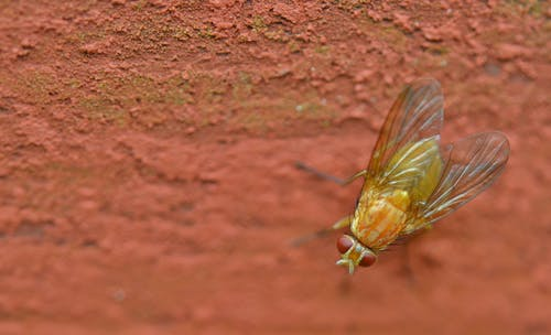 Gratis stockfoto met close-up, detailopname, insect, kever
